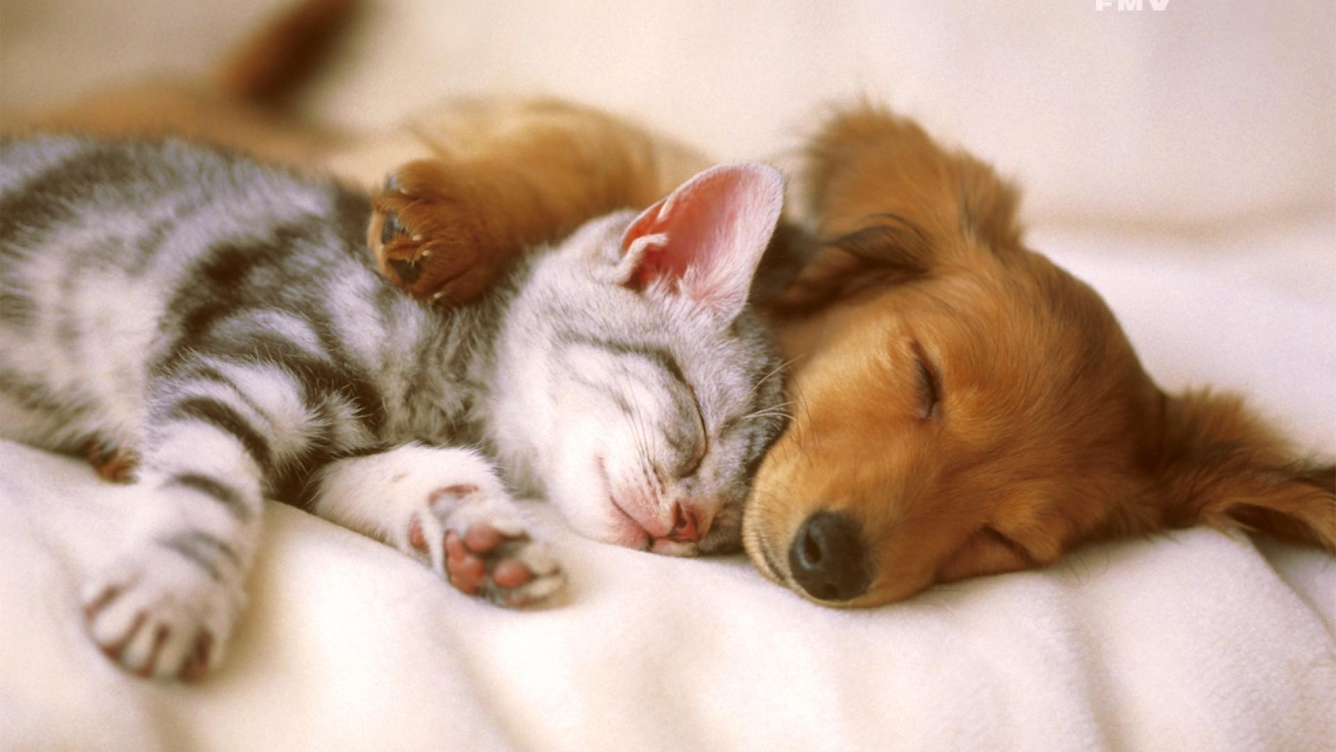 Passe em Animais, todo último domingo do mês